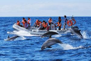 RIB Zodiac Dolphin watching holidays Azores