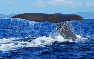 Flexible Whale Watching • Family