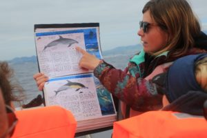 learning about whales in the Azores