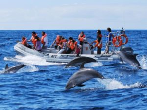 RIB boat dolphin watching in the Azores