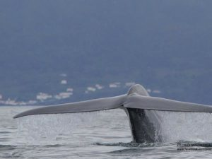 whale tail Azores