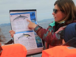 Expert guides whale watching Azores