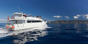 Catamaran whale dolphin watching holidays Azores