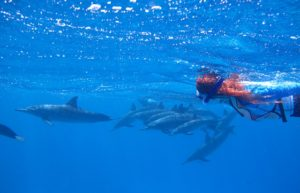 Under water swimming with dolphins Azores