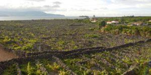 volcanic vineyards Azores walking holidays
