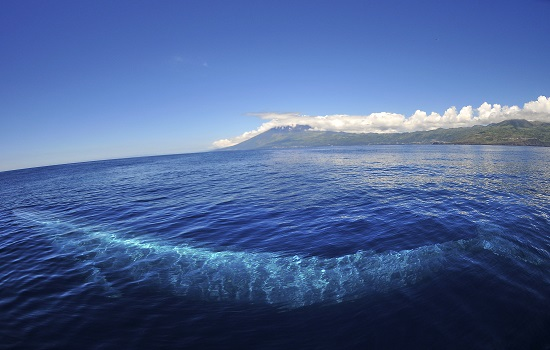 Blue Whale Azores Under The Ocean