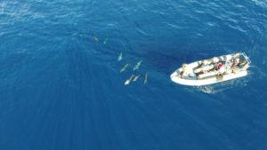 RIB boat ariel shot Azores