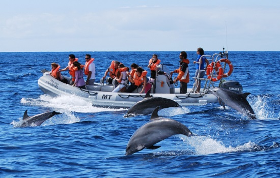 Dolphin Watching Azores