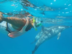 Swimming with wild dolphins Azores 2