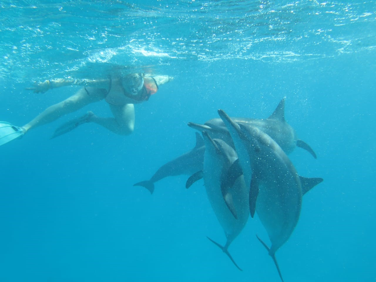 Swimming with wild dolphins Azores